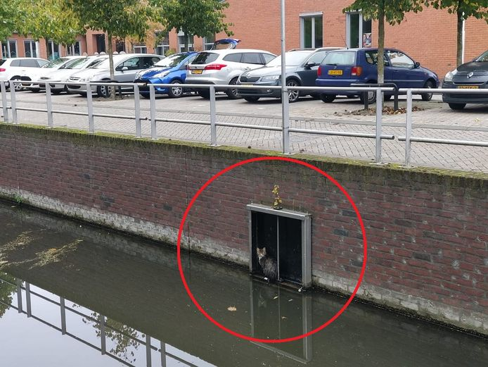Dierenambulance redt kat langs waterkant in Utrecht