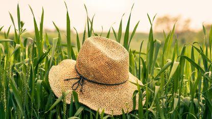 Dé 8 zomerklussen voor je tuin en terras