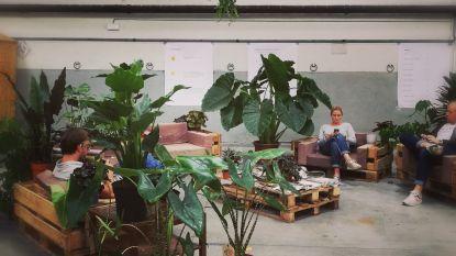 Planten-pop-up PUP palmt Wagenoord in