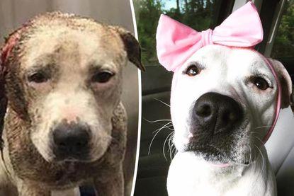 Abigail raakte oor kwijt na leven vol mishandeling en is met kleurrijke hoofdbanden nu baken van hoop