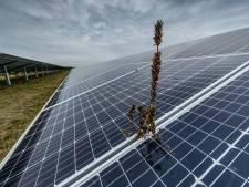 Donkere wolken boven Roosendaalse coalitie na nieuwe clash over zonneparken
