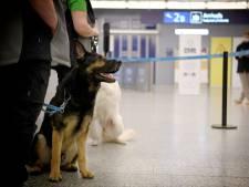 Des chiens pisteurs pour flairer le coronavirus dès février en Belgique
