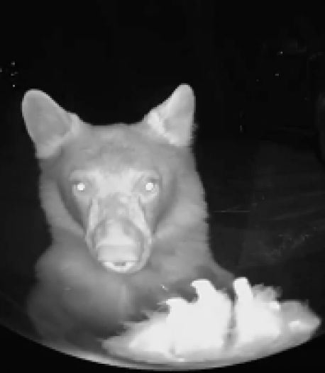 Un ours sonne à leur porte en pleine nuit