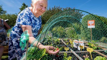 Rusthuisbewoners telen voortaan samen groenten in 'warme tuin'