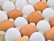 Bruine eieren niet gezonder dan witte, wel veel duurder
