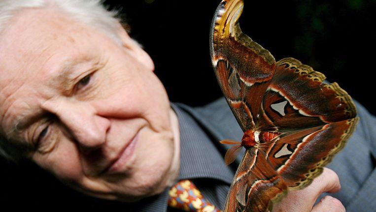 David Attenborough met een Atlasvlinder Beeld ANP