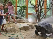 Warme douche voor reuzenschildpadden in DierenPark Amersfoort