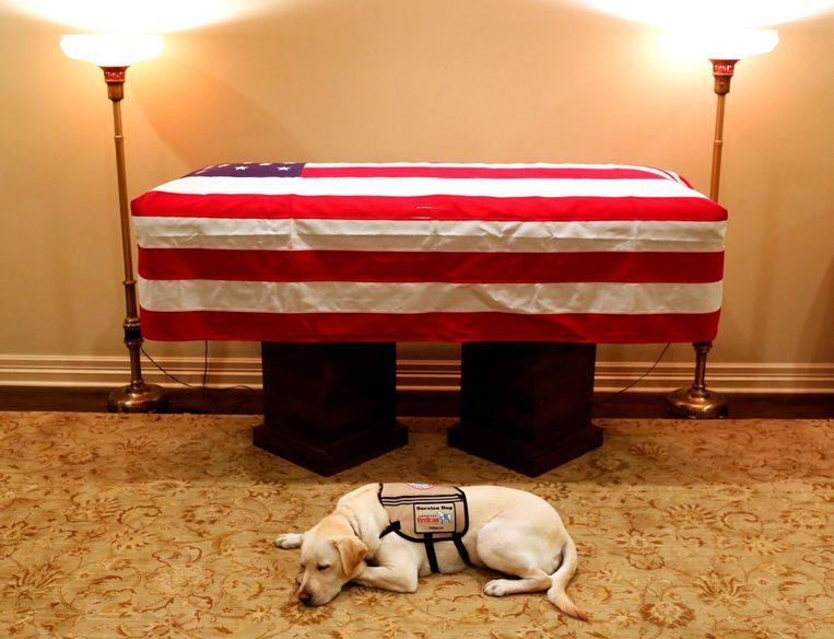 Ook honden rouwen bij overlijden van hun baasje