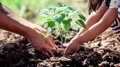 Bouwbedrijf maakt Ertvelde groener