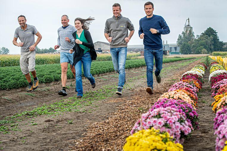 Chrysantenkwekerij Gediflora pakt uit met de 'Mum Run', een loopwedstrijd tussen de bloemenvelden van het bedrijf.