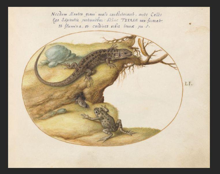 Tekeningen van Joris Hoefnagel die te zien zijn in het boek Insert Artifice van Marisa Anne Bass. Beeld