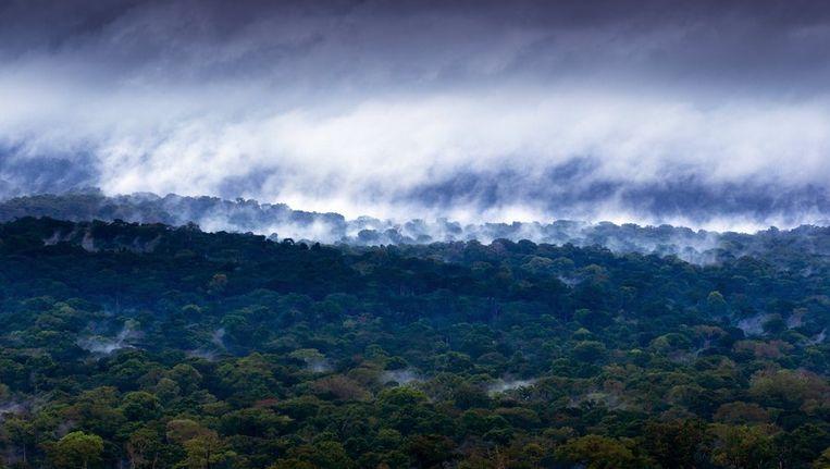 Congo heeft eigen monster van Loch Ness: Mokele-mbembe | De