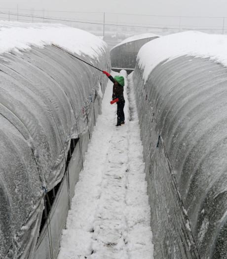 Westlandse kassenbouwers sluiten miljoenendeal met China