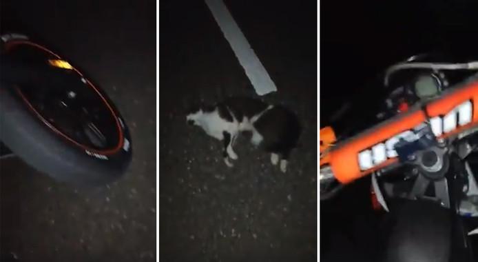 Screenshots van de doodgereden kat.
