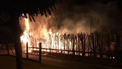 Kurkdroge haag gaat in vlammen op