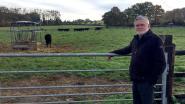 Wagyu-koeien verlaten domein Altenbroek