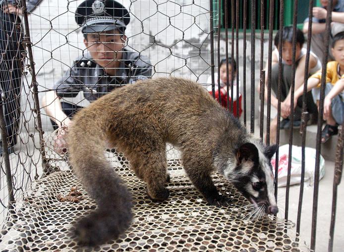 De Chinese politie ontdekt een illegaal gehouden civet bij een boer in Wuhan. (archieffoto, 2003).