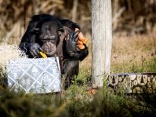 Safari Beekse Bergen gaat twee weken dicht wel redden