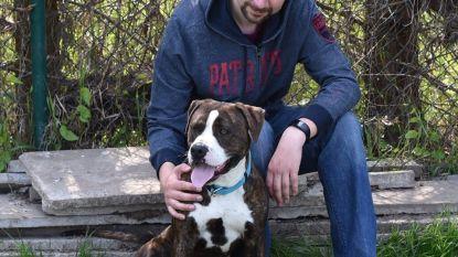 Gouverneur fluit burgemeester terug: pitbull Paco mag dan toch blijven leven