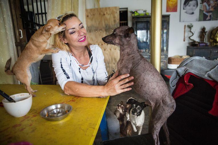 Maria Moria geeft met haar stichting Zorgeloos Dierenleven zielige dieren een tweede kans.  Beeld