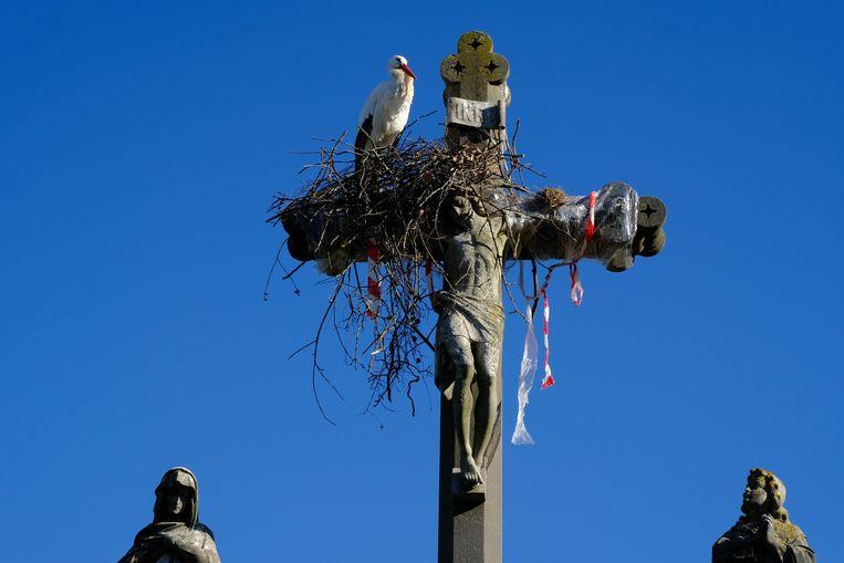 De ooievaar bouwt een nieuw nest op het kruis ondanks een plastic lint dat hem er moet wegjagen.