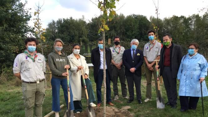 Demir zwaait met geld op zoek naar 4.000 hectare bos extra in 4 jaar: 122 miljoen om iederéén bos te doen planten