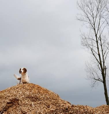 Waarom biomassa een grotere klimaatkiller is dan steenkool