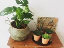 Voor een hip interieur haal je aardetinten en véél planten in huis