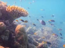 Un plongeur mordu à la tête par un crocodile sur la Grande Barrière de corail