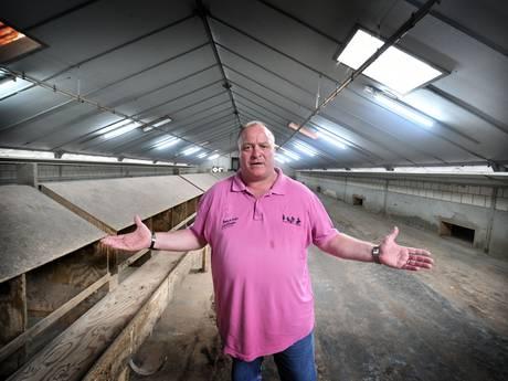 Goed nieuws voor kippenboer in Denekamp: er zijn weer eieren