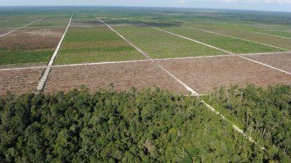 """""""Palmolieproducenten vernietigen Indonesisch regenwoud ondanks overeenkomst"""""""