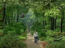 Lage Bergse Bos krijgt variatie aan bomen