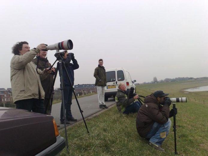 Vogelliefhebbers bij het spotten van de zeearend in Bemmel. De vogel is eerder ook in Lienden gespot. Foto: Rob van der Velden