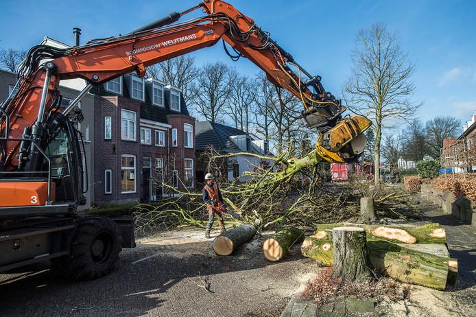 breda-foto : ron magielse na een lang juridisch gevecht tussen bewoners en gemeente is begonnen met bomenkap aan de bavelselaan.