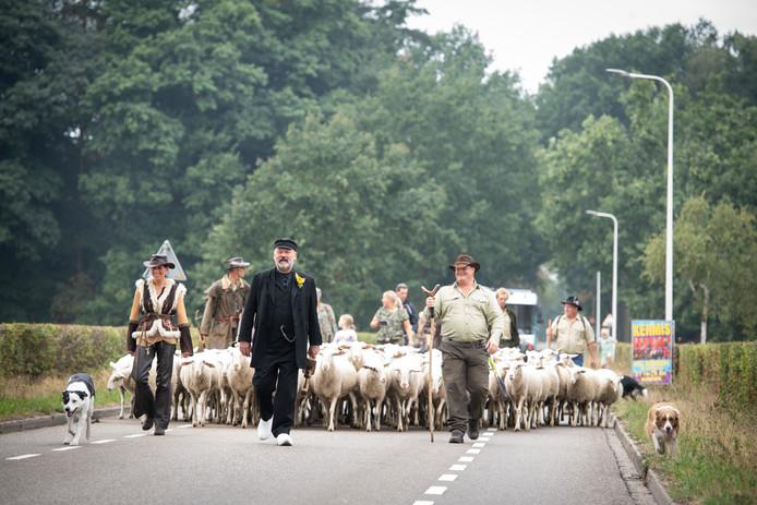 De schapen daalden ook vorig jaar achter Klepperderk aan de berg af