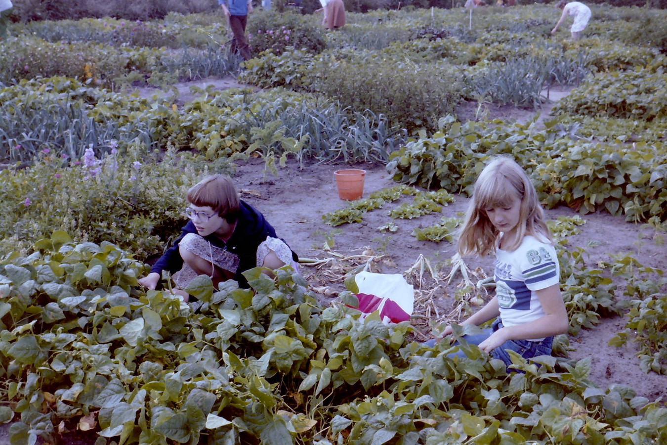 Ter hoogte van de Dahliatuin was vroeger een kindertuin. Kinderen konden hier onder begeleiding zelf groentes kweken, zoals boontjes, bietjes, worteltjes en sla. De tuin was op de woensdagmiddag en zaterdagmorgen geopend. Het meisje links op deze foto uit 1978 is Mirjam Koning met rechts haar nichtje Chieni van Deventer.