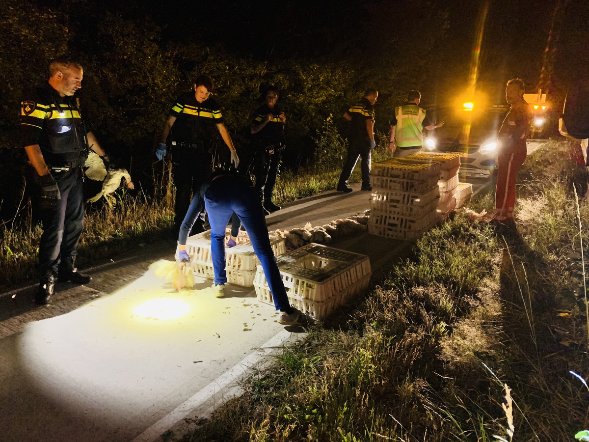 De kratten met kippen die op 5 augustus door een vrachtwagenchauffeur zijn verloren op de provinciale weg bij Sint Anthonis.