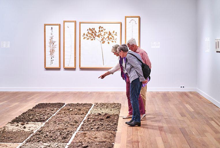 Kijken naar de natuur in het Stedelijk Museum Alkmaar Beeld Roel Backaert