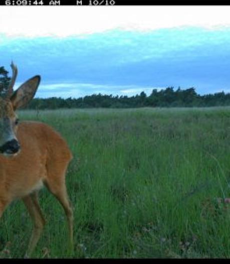 Al meer dan 600.000 foto's van wild Hoge Veluwe bekeken