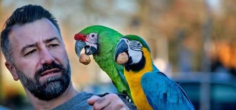 Populaire papegaai Kuif en zijn maatjes krijgen eigen merchandise: 'We worden al herkend op straat'