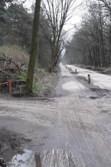30 km-zone voor taurossen in Schaijkse bossen