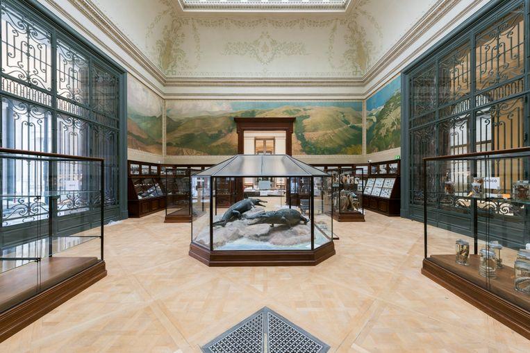 De Krokodillenzaal is de enige zaal die intact is gelaten. In 1910 zag de inrichting er al zo uit.  Beeld Jo Van de Vijver