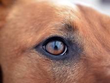 Dertig vermagerde honden in woning Wemeldinge