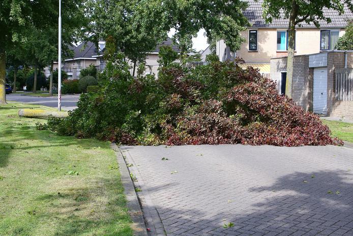 Op de Terloo in Oss is vanmiddag een boom omgewaaid en over de weg gevallen.