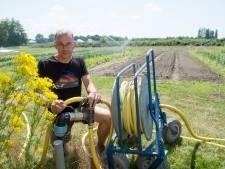 Extreme droogte nekt sla en courgettes: Groenten op StadsAkkers hebben grote dorst