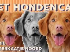 Slecht nieuws voor hondenliefhebbers: eind aan Rotterdams Hondencafé