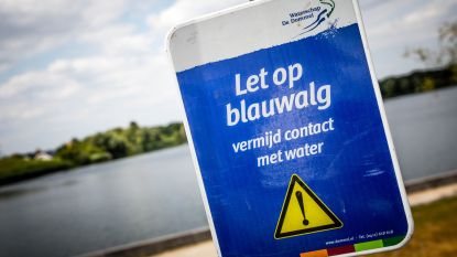 Zwemverbod door blauwalg in Europark Resort De Kempen in Mol