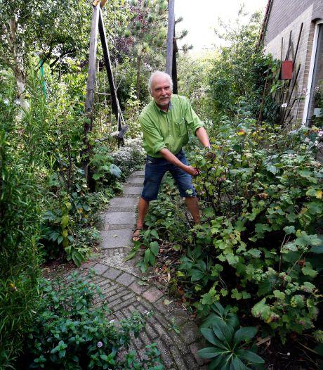 'Steeds meer tegels in Gorcumse tuinen, maar groen zorgt voor verkoeling'