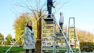 Kunstenaar Pol Pazmany maakt 'Sterretjesboom' in ijzerwerk