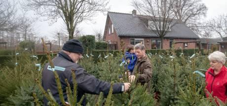 Iedereen wil weer een échte kerstboom uit Overberg